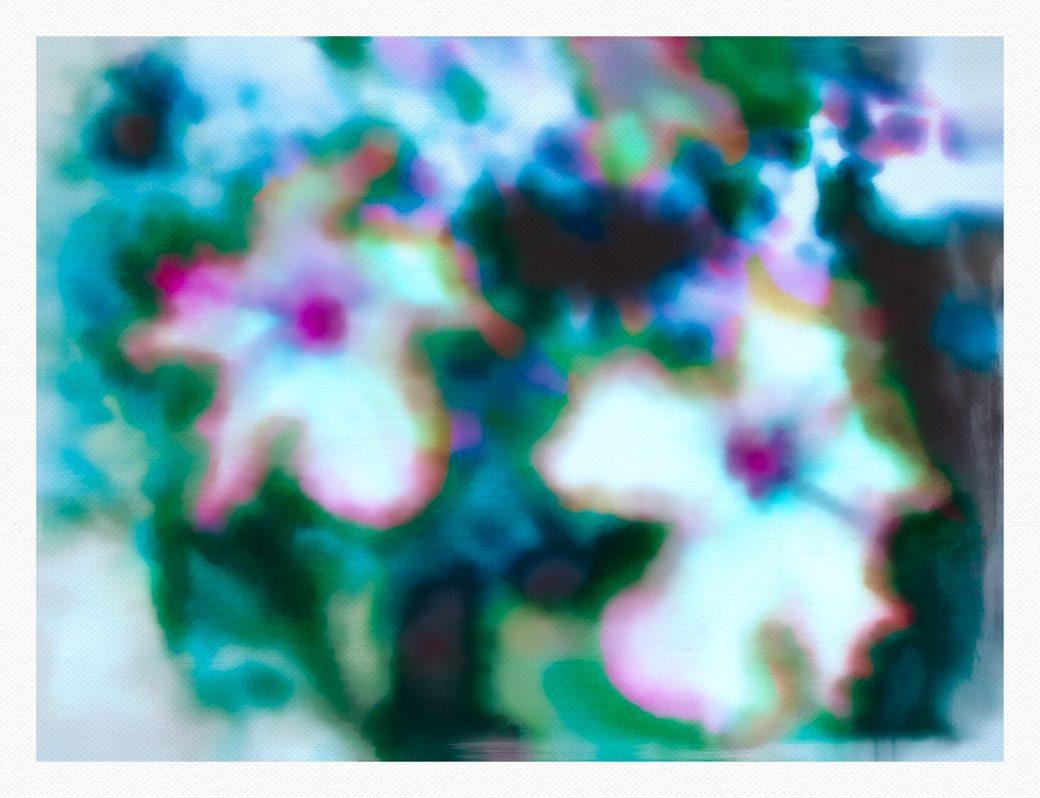 FlowerSaltArgentia1-2014