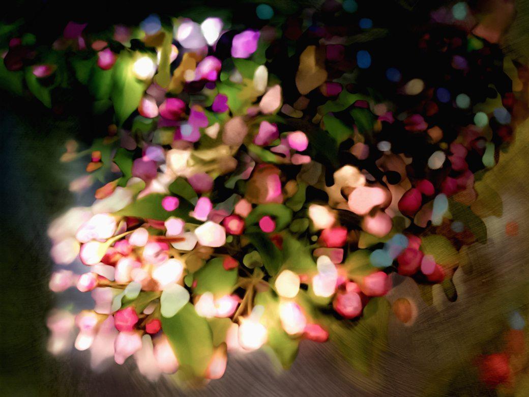 flowering pet plum tree