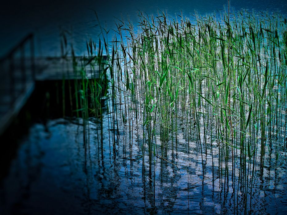 Sauna Reeds Finland Two