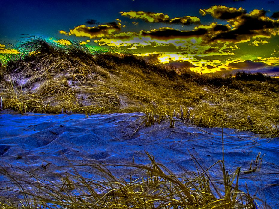 Dunes Sandy Neck 20Feb2011