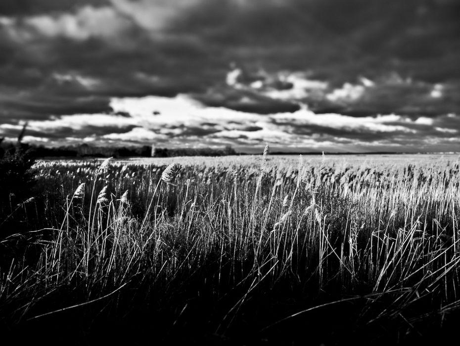 Barnstable Great Marsh